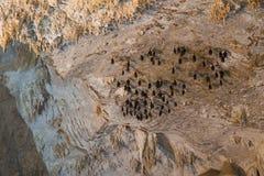 Knuppels die in Diamond Cave of Tham Pranangnai, Krabi Thailand hangen Royalty-vrije Stock Afbeelding