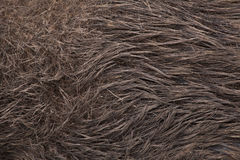 knura scrofa sus dziki tileable skóry bezszwowa tekstura Zdjęcie Stock