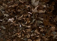 Knusprige Blätter Browns im April 2017 Stockfotos
