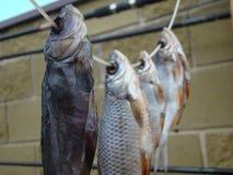 Knyckig fisk Royaltyfri Fotografi