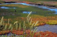 Knysna, трасса сада, Южно-Африканская РеспублЍ. Стоковое фото RF