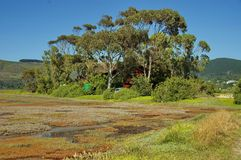 Knysna, трасса сада, Южно-Африканская РеспублЍ. Стоковые Изображения