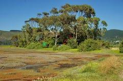 Knysna, de Route van de Tuin, Zuid-Afrika. Stock Afbeeldingen
