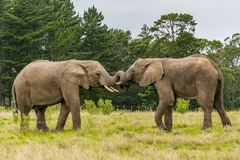 Knysna Elephant Sanctuary, South Africa Stock Photos