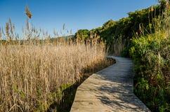 Knysna, Garten-Weg, Südafrika Lizenzfreie Stockfotos