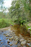Knysna-Wald, Südafrika Stockfoto