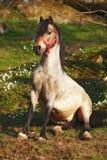 Koński obsiadanie w ogródzie fotografia stock