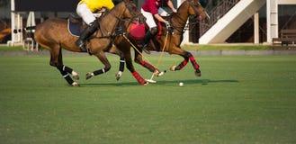 Koński polo gracza gacenie polo piłka obraz stock