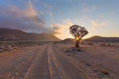 Kołczanu Drzewny słońce Starburst Obrazy Royalty Free