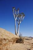 Kołczanu drzewo fotografia royalty free