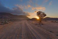 Kołczanu drzewo przy wschodem słońca Obraz Royalty Free