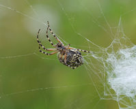 Koło pająk Zdjęcia Stock