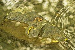 Kołysa przy małym strumieniem z odbiciem drzewa Zdjęcia Royalty Free