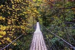 Kołyszący most, spacer Przez spadku Obrazy Stock