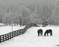 koń łąka śniegu Fotografia Royalty Free