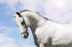 koń Obrazy Stock