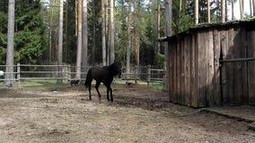 Koń zdjęcie wideo
