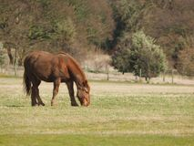 koń błotnisty fotografia stock