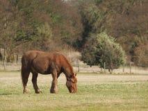koń błotnisty obrazy stock