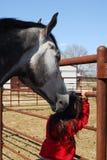 koń dziewczyny mały szturchać Zdjęcia Stock