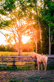 Koń gospodarstwo rolne Fotografia Stock