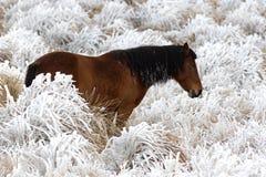 Koń i śnieg Obrazy Royalty Free