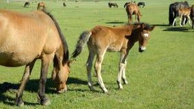 Koń i źrebak obrazy royalty free