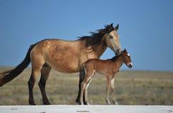 Koń i źrebię Zdjęcie Royalty Free