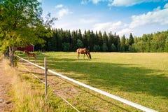 Koń i źrebię na gospodarstwie rolnym Zdjęcie Royalty Free