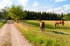 Koń i źrebię na gospodarstwie rolnym Obraz Royalty Free