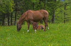 Koń i faul przy paśnikiem obrazy royalty free