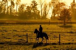 Koń i jeździec Obraz Royalty Free