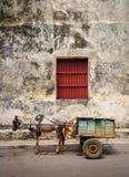 Koń i powozik w Kuba obrazy stock
