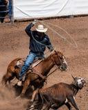 Koń i przejażdżka z perfect pracą zespołową fotografia royalty free