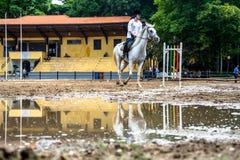 Koń i reflextion na kałuży podczas sesi equestriani Zdjęcie Stock