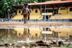 Koń i reflextion na kałuży podczas sesi equestriani Fotografia Stock
