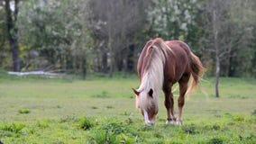 Koń je trawy na paśniku zdjęcie wideo