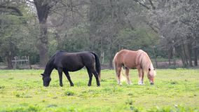 Koń je trawy na paśniku zbiory wideo