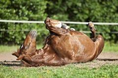 Koń kłaść na plecy i mieć zabawie staczać się w piasku Zdjęcia Royalty Free