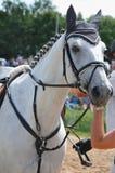 koń monochromatyczny portret białe zdjęcie Zdjęcie Stock