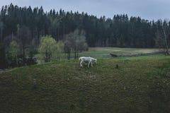 Koń na łące zdjęcia stock
