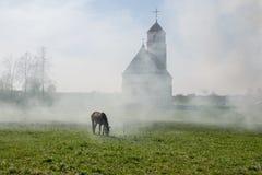Koń na łące blisko świątyni Obrazy Royalty Free