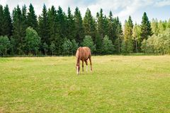 Koń na gospodarstwie rolnym Zdjęcia Stock