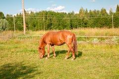 Koń na gospodarstwie rolnym Fotografia Stock