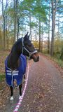 Koń na a jechał obrazy stock