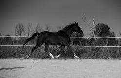 Koń na naturze Portret koński, brown koń, zdjęcie stock