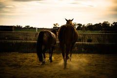Koń na naturze Portret koński, brown koń, fotografia stock