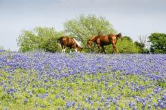 Koń na paśniku - Błękitne czapeczki Zdjęcia Royalty Free