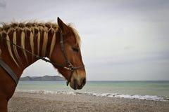Koń na plaży zdjęcie royalty free