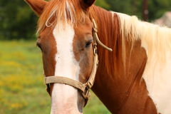 koń na ranczo obrazy stock
